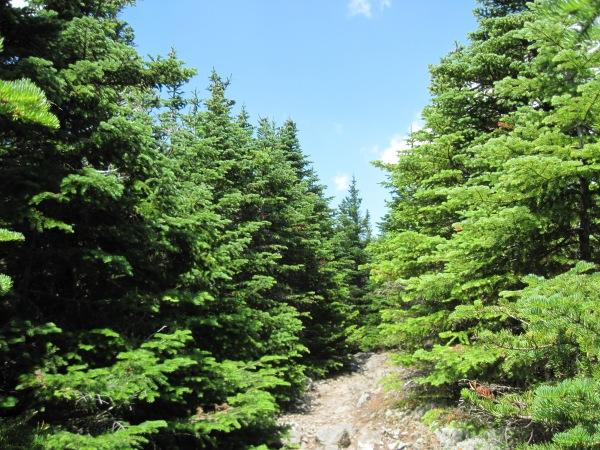 Start of the ridge walk