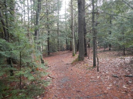 Bear Brook Mountain Biking - December