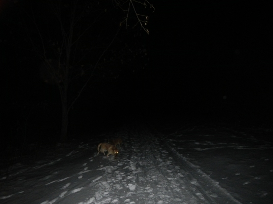 Friday Night Snowshoeing