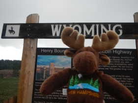 NH Moose in Wyoming