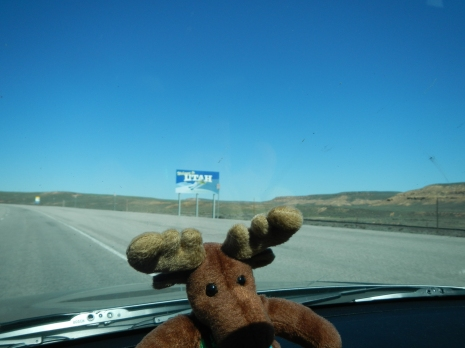NH Moose hits Utah