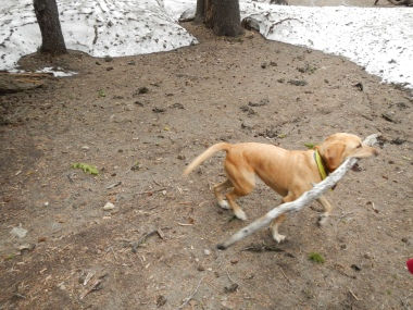 Walk softly and carry a big stick!