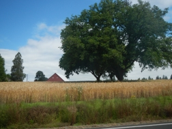 Barn from our ride