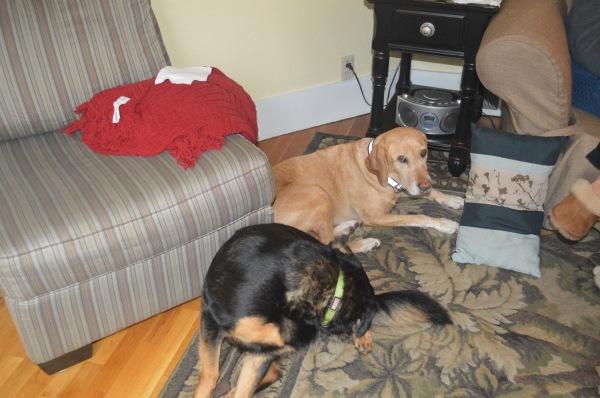 Codi and Molly